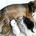 """Tres tristes tigres """"hijos"""" de perra"""
