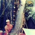 ¿Cuál es el mayor pez de agua dulce del mundo?