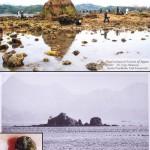 Cangrejos japoneses están borrando a una isla del mapa