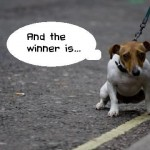 Elige al ganador (pensamientos perrunos)