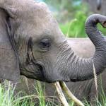 De elefantes, cantimploras y campanas…