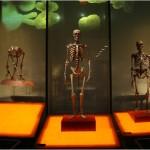 ¿Y por qué no traer de vuelta a la vida a un Neanderthal?