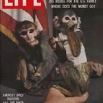 Los monos llegaron al espacio hace medio siglo
