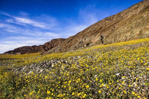 ya-es-primavera-en-el-valle-de-la-muerte