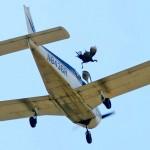 ¿Qué pasa si tiras a un pavo doméstico vivo desde una avioneta?