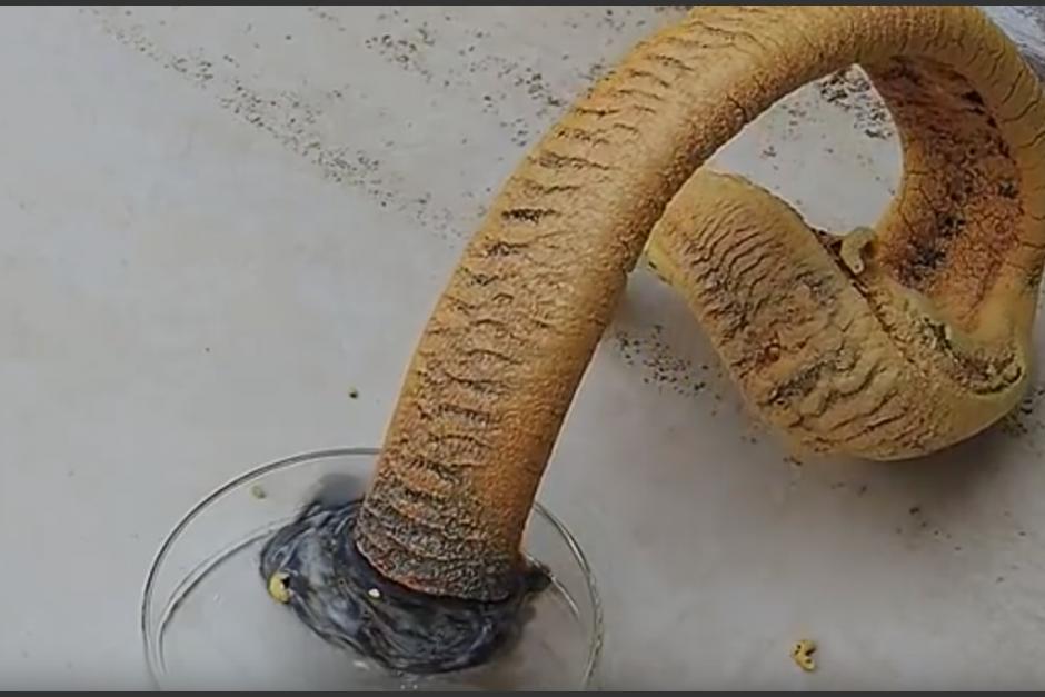 Serpiente del faraón
