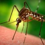 8 datos interesantes sobre los mosquitos