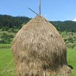 La sencilla tecnología que cambió a occidente: el heno