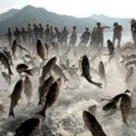 Crean escuela de peces kamikazes