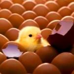 ¿Qué hay de huevo, pollo?