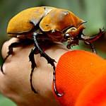 Todo escarabajo necesita amor