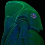 Iluminando Lilliput (belleza artística en el microscosmos)