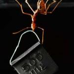 Hormiga tejedora asiática (el insecto forzudo)