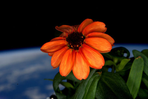 flor-espacial