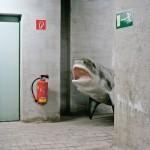 Señor Pichler, hay un tiburón blanco en el pasillo