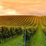 El calentamiento global ha sido bueno para el vino (pero todo se acaba)
