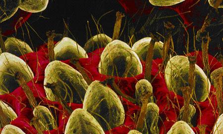 detalle-de-las-semillas-de-una-fresa