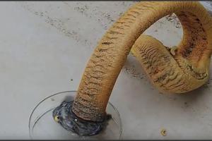 Serpiente del faraón o por qué no es buena idea mezclar niños y tiocianato de mercurio